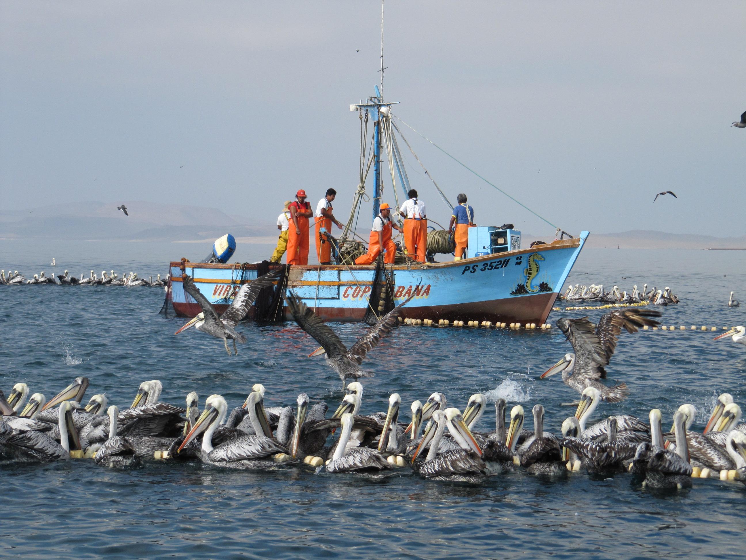 Fiskare utanför Perus kust
