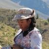 Livet i Anderna
