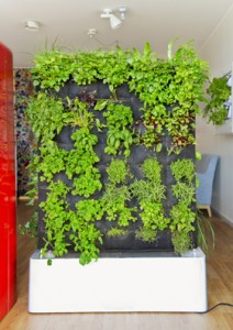 Växtvägg i nytt KTH-projekt. Foto Susanne Kronholm/KTH